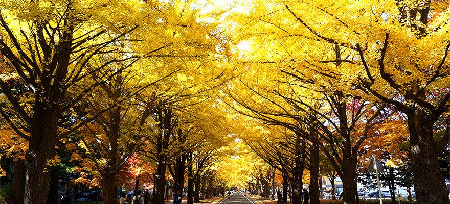 แนะนำ! จุดชมใบไม้เปลี่ยนสีที่แรกในญี่ปุ่นที่ฮอกไกโด!