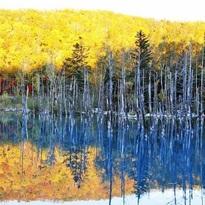 去看日本最早的紅葉吧!北海道的楓葉・銀杏景點推薦