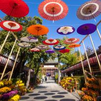 來去參加日本三大稲荷神社「笠間稲荷神社」的菊花盛典!栗子美食與日本酒也超推薦!