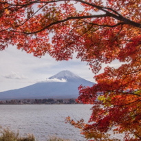 Iconic Views of Mount Fuji: Fuji Kawaguchiko Autumn Leaves Festival