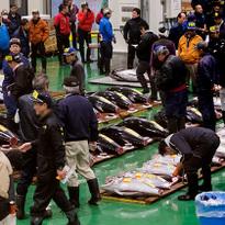 """ตะลุย """"ตลาดปลาโทโยสุ"""" ตลาดใหม่ ณ โอไดบะแห่งโตเกียว!"""