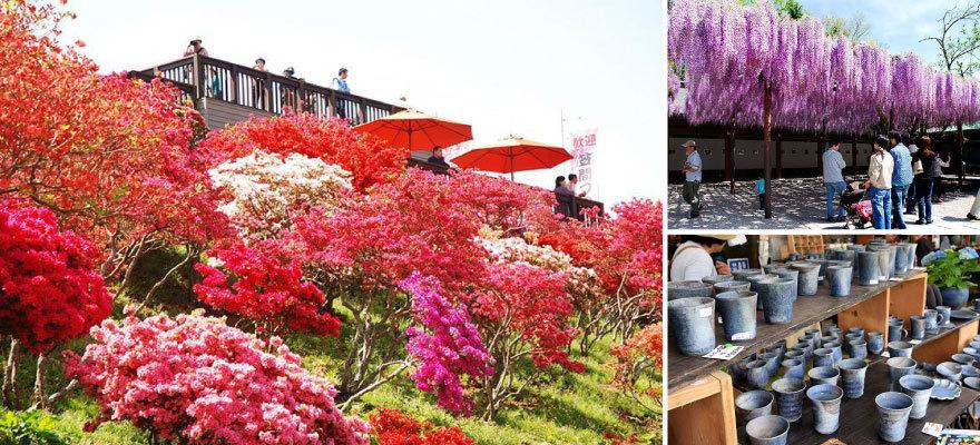 วันหยุดโกลเด้นวีคไปเที่ยวคาซามะกัน! ทั้งเทศกาลดอกสึสึจิ งานเซรามิก และเกาลัค