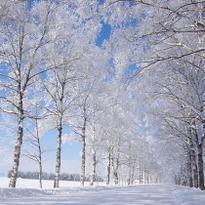 厳冬期にしか見られない幻想的な風景 冬のひがし北海道で出会える「雪と氷のアート」7選