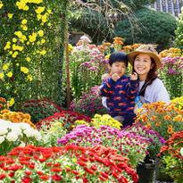 """เที่ยว """"แกลมปิ้ง"""" ณ เมืองคาซามะ ท่ามกลางดอกไม้สีสันงดงาม"""