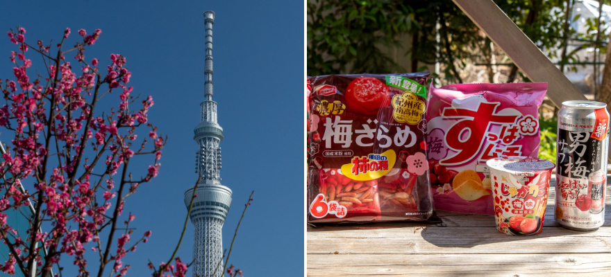 Early Spring Beauties! 4 Spots to See Plum Blossoms in Tokyo (and 3 Plum Snacks to Go With Them)