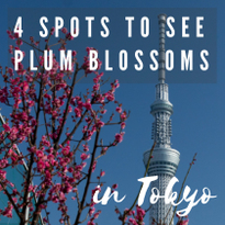 Early Spring Beauties! 4 Spots to See Plum Blossoms in Tokyo
