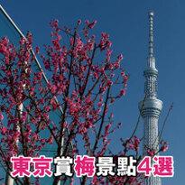 早春就來享受賞梅的樂趣!東京賞梅景點4選(季節限定梅子點心也別錯過)