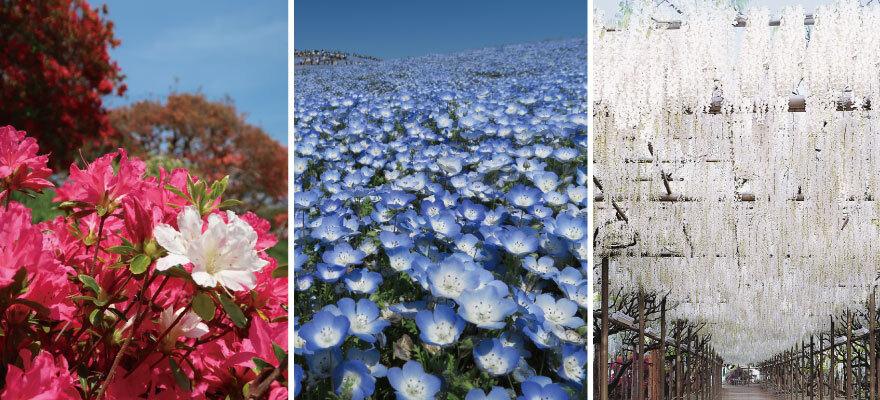 春天絕對不能錯過的美景!東京近郊絕景花田5選