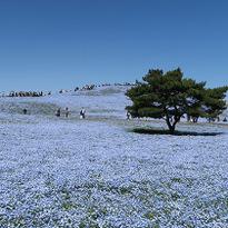 春旅で見逃せない!東京近郊で見つけた絶景花畑5選