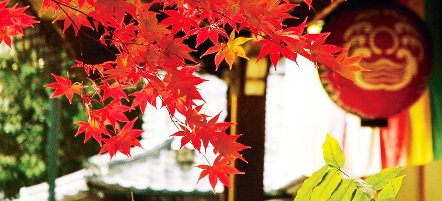 京都必看楓葉景點
