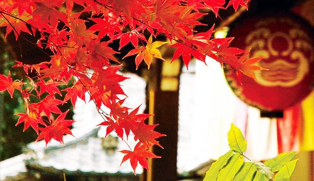日本赏枫现在出发!京都红叶攻略珍藏版