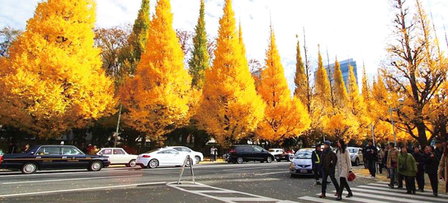 赏枫好去处,东京五大红叶观赏地