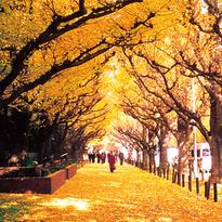 """สุขกลางกรุง """"Autumn in Tokyo"""""""