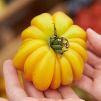 도쿄 자유 여행 추천 코스 - 일본 마르쉐 Farmer's Market @ UNU