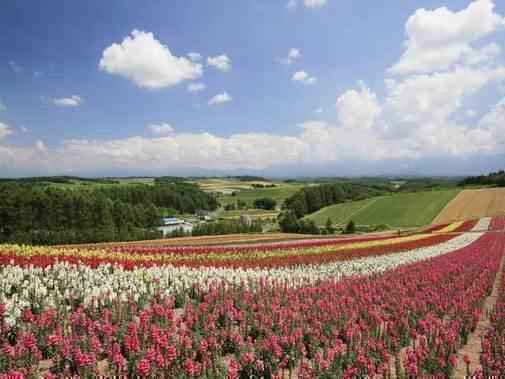 Shikisai-no-Oka garden