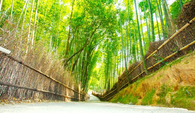 美拍京都1日游