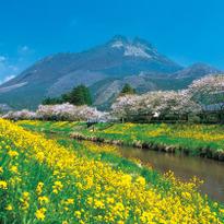 처음 가는 후쿠오카, 유후인 자유여행 필수 코스