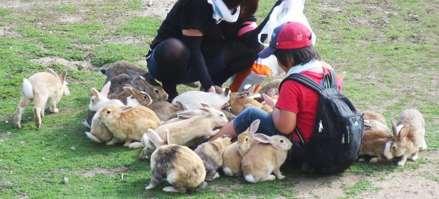 廣島縣大久野島可愛兔子島