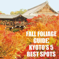 Kyoto's Fall Top 5!