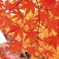 """5 สถานที่ถ่ายรูปสวยๆ แล้วคุณจะหลงรัก """"Autumn in Kyoto"""""""