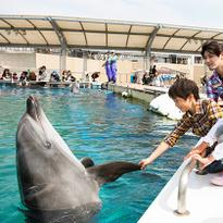 Yokohama Hakkejima Sea Paradise_Aqua Resorts