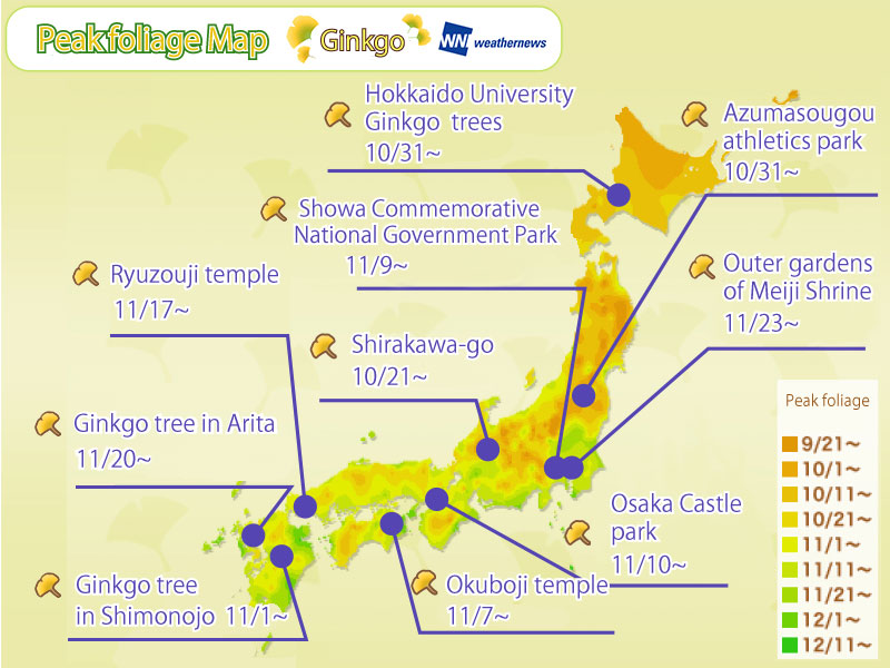 Ginkgo Viewing Time Forecast by Location