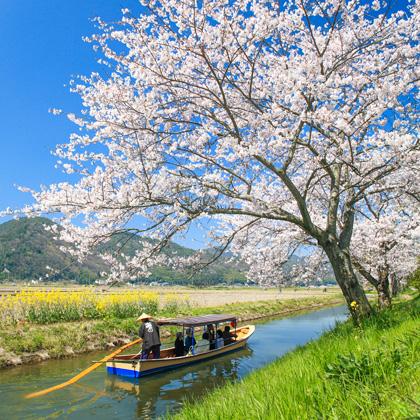 DIGJAPAN!桜の記事