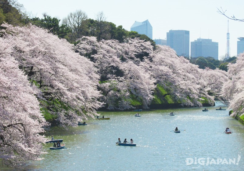 日中の千鳥ヶ淵と満開の桜