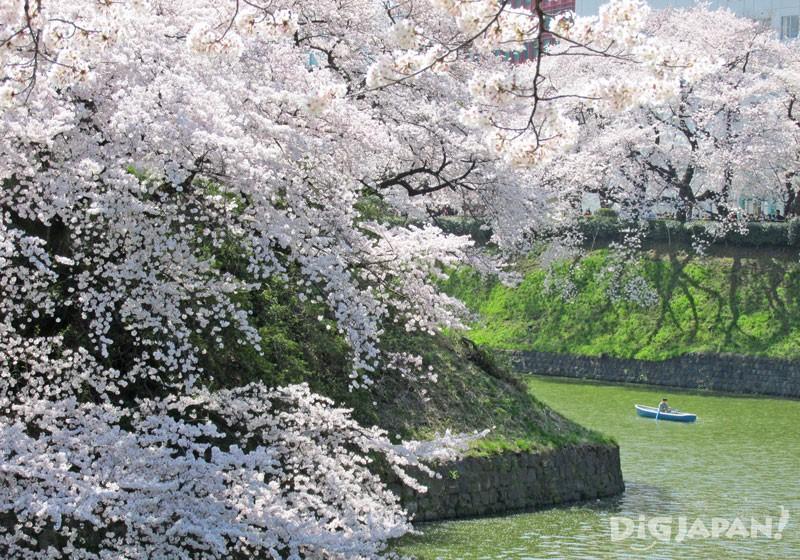 晴れた日の千鳥ヶ淵と桜
