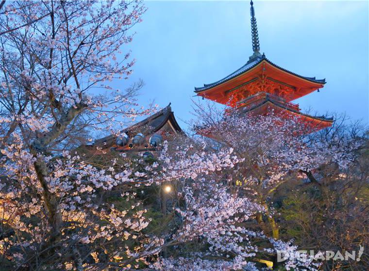 Sakura at Kiyomizu-dera in Kyoto