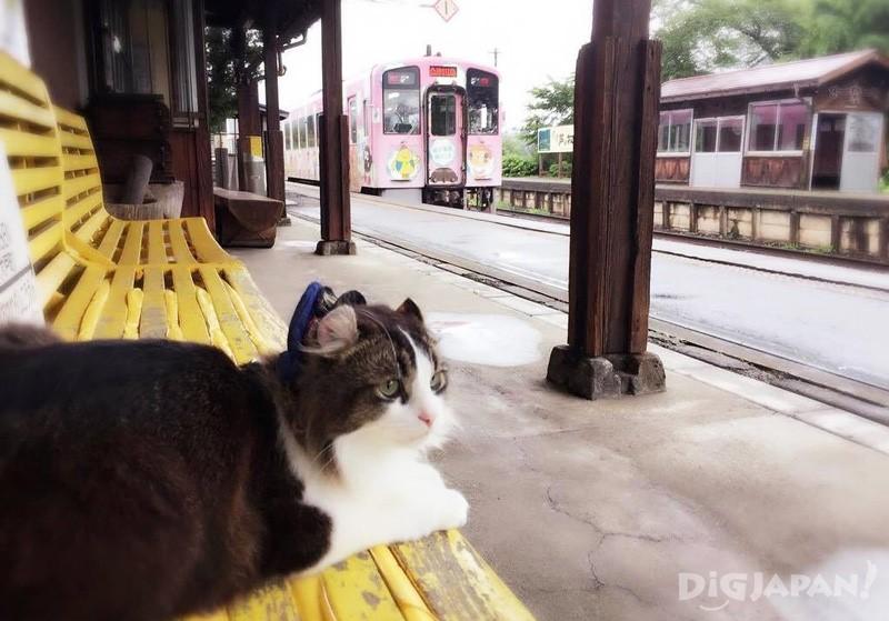列車を見送るらぶ駅長