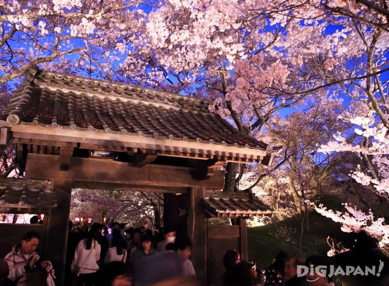 Sakura at Takato Castle Ruins Park in Nagano