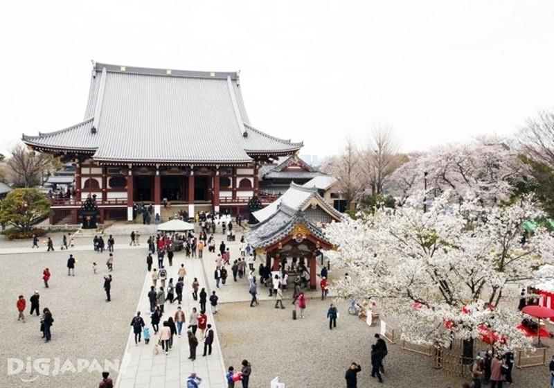 池上本門寺 境内の桜