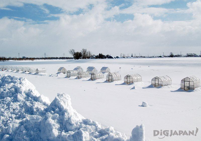 體驗冰釣西太公魚釣魚場