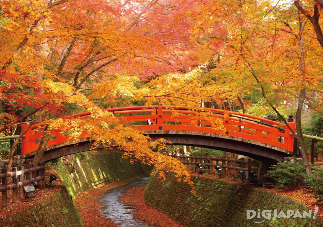 Autumn_Kyoto_10
