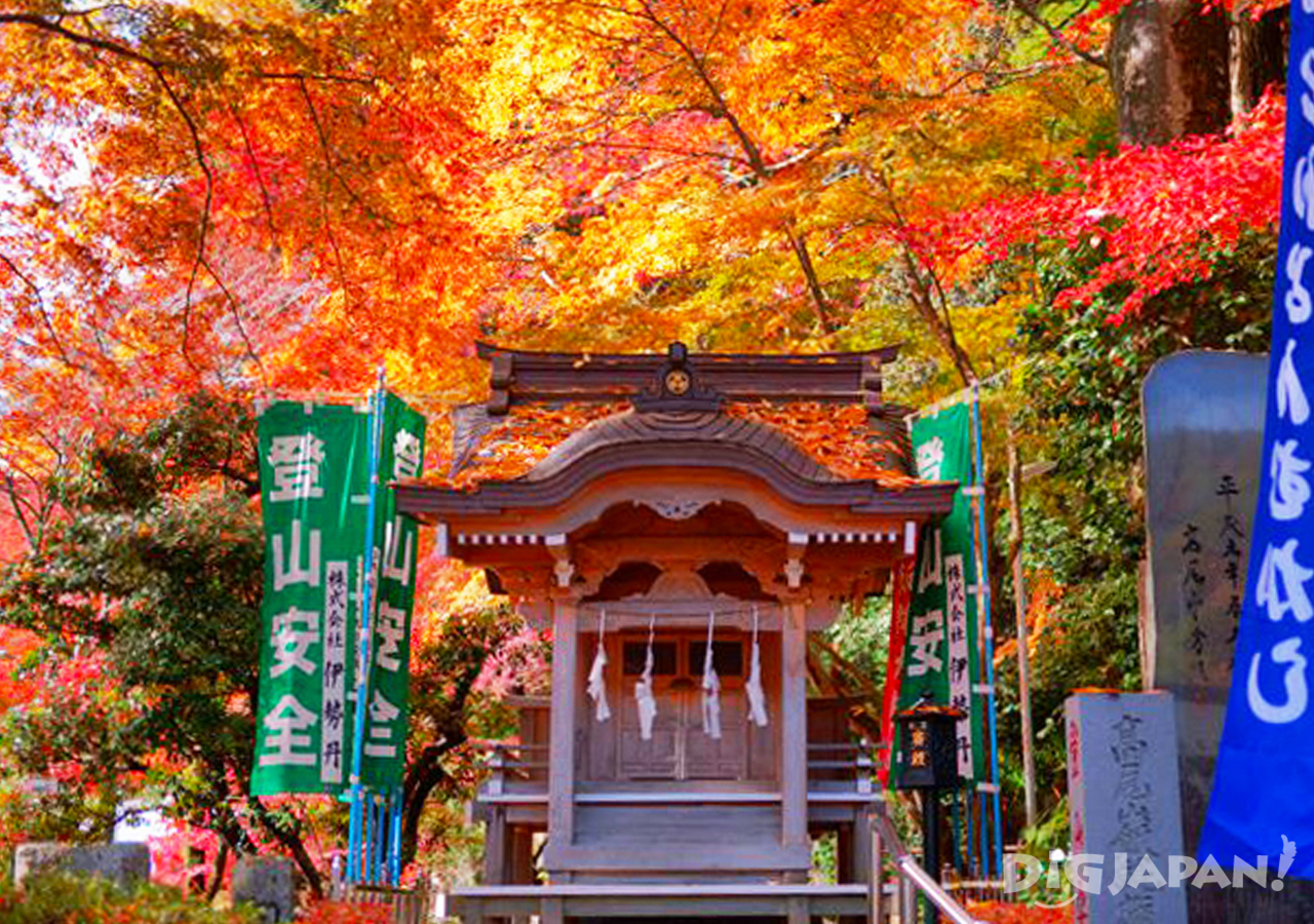 Autumn leaves at Mt. Takao