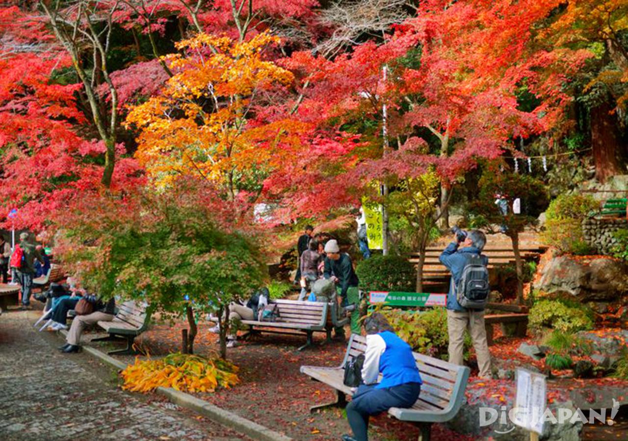 Autumn_Tokyo_3