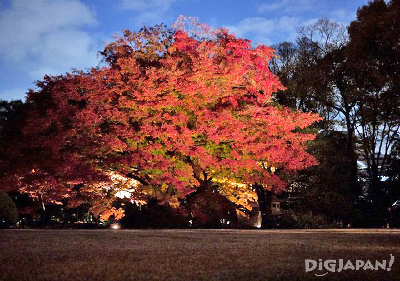 Illuminated fall foliage at Rikugien in Tokyo