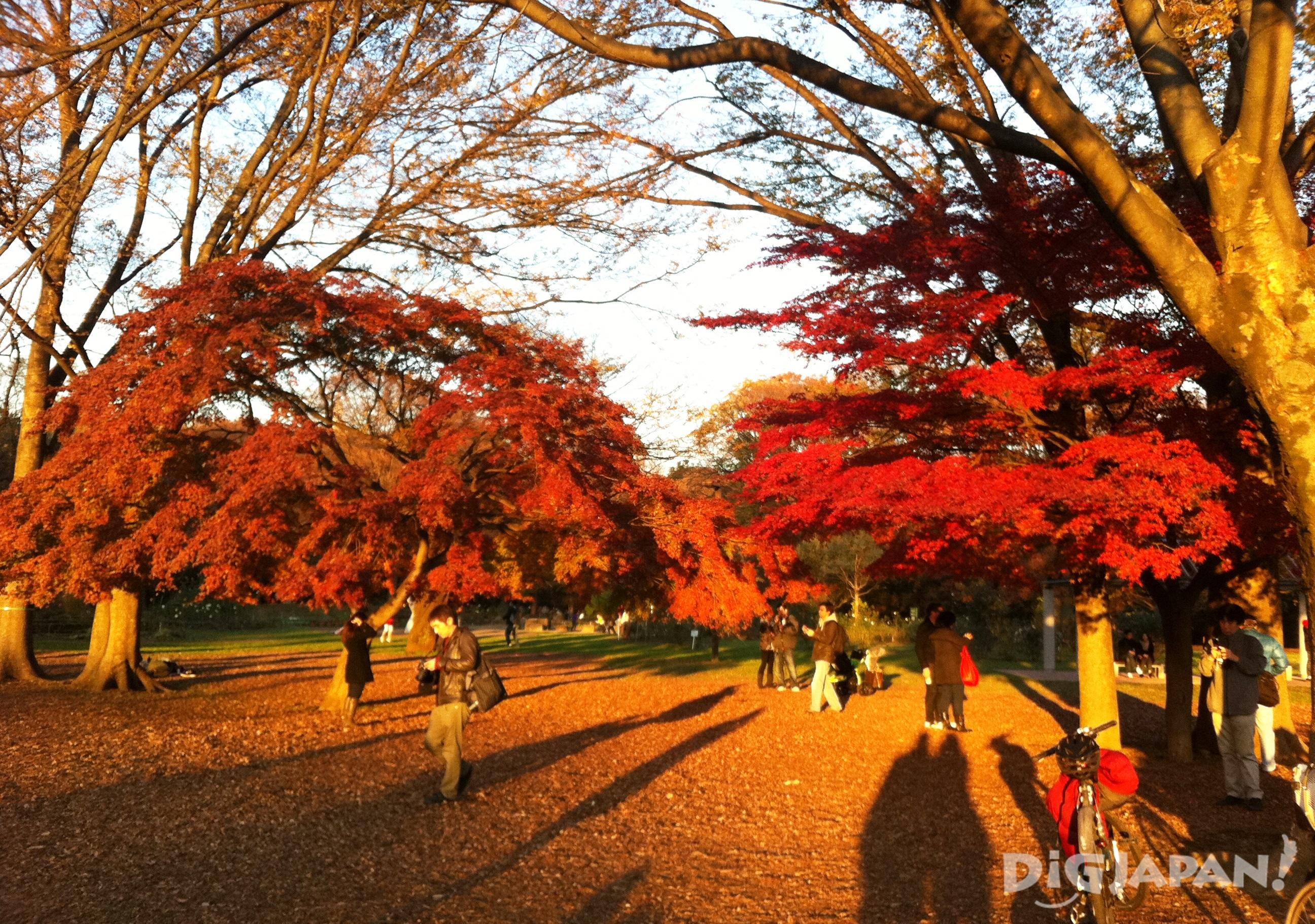 Autumn_Tokyo_7