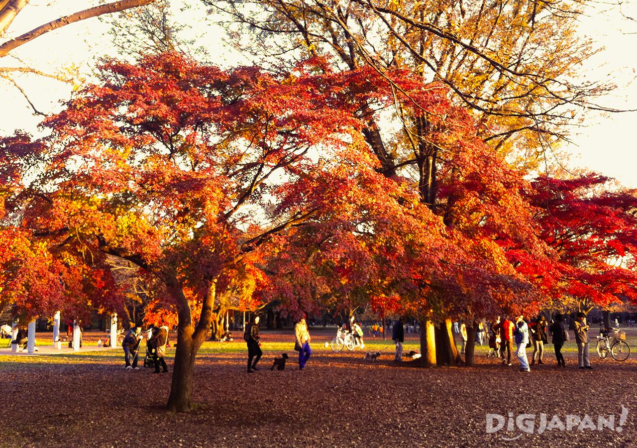 Autumn_Tokyo_9