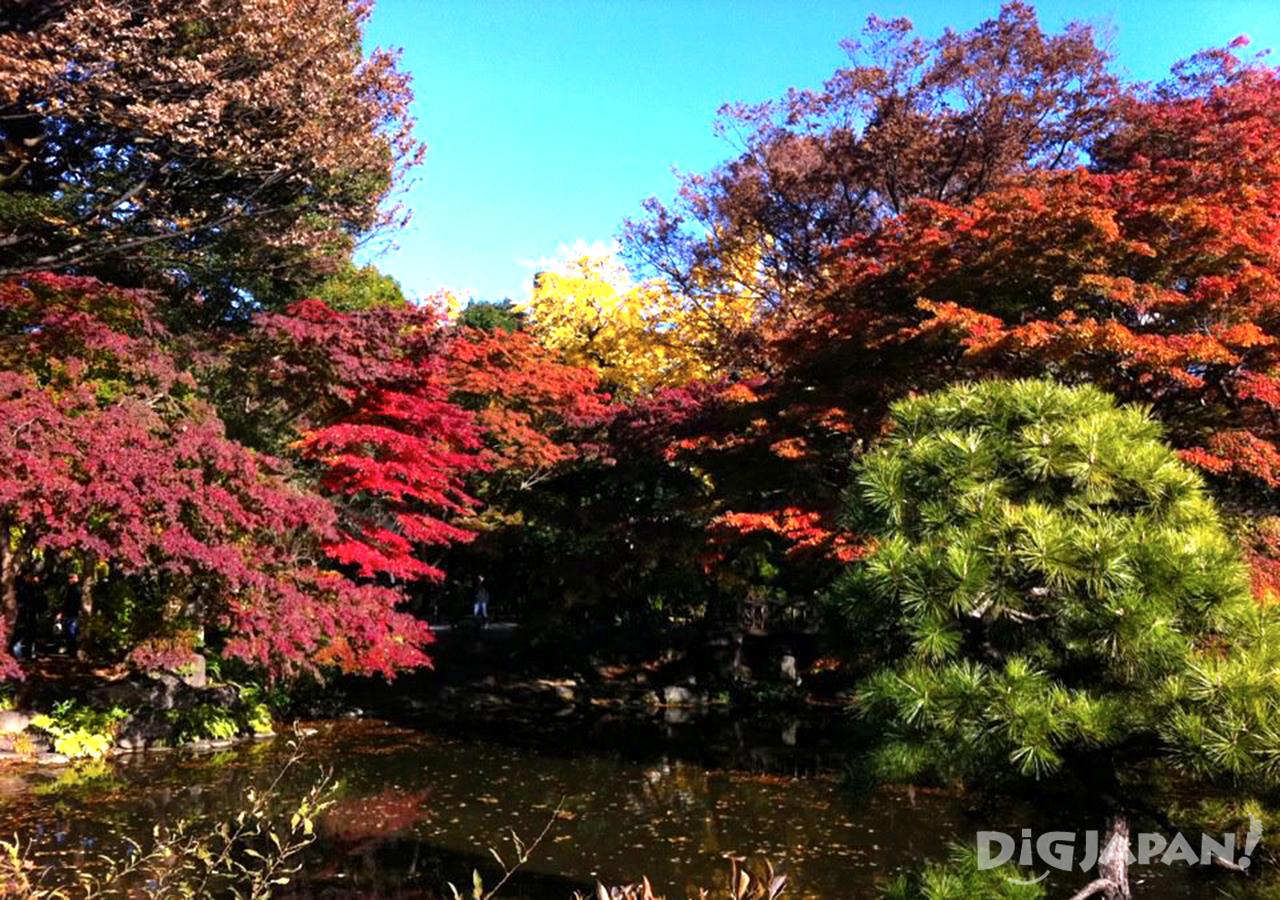 Autumn_Tokyo_11