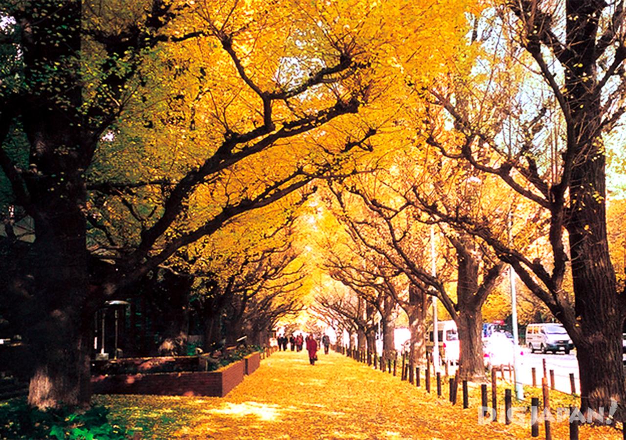 Autumn_Tokyo_14
