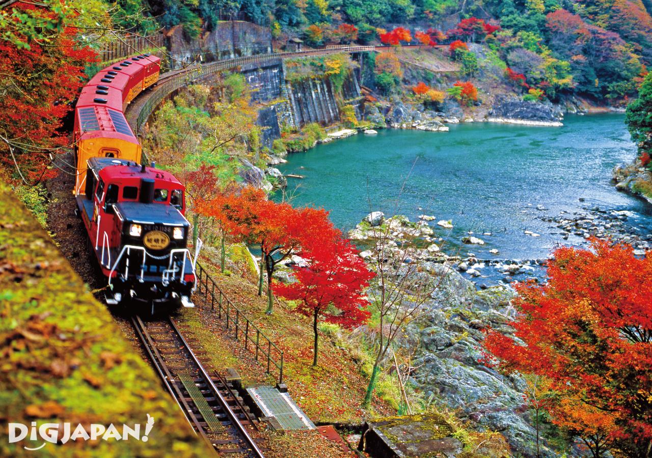 京都必看楓葉景點-嵯峨野遊覽小火車