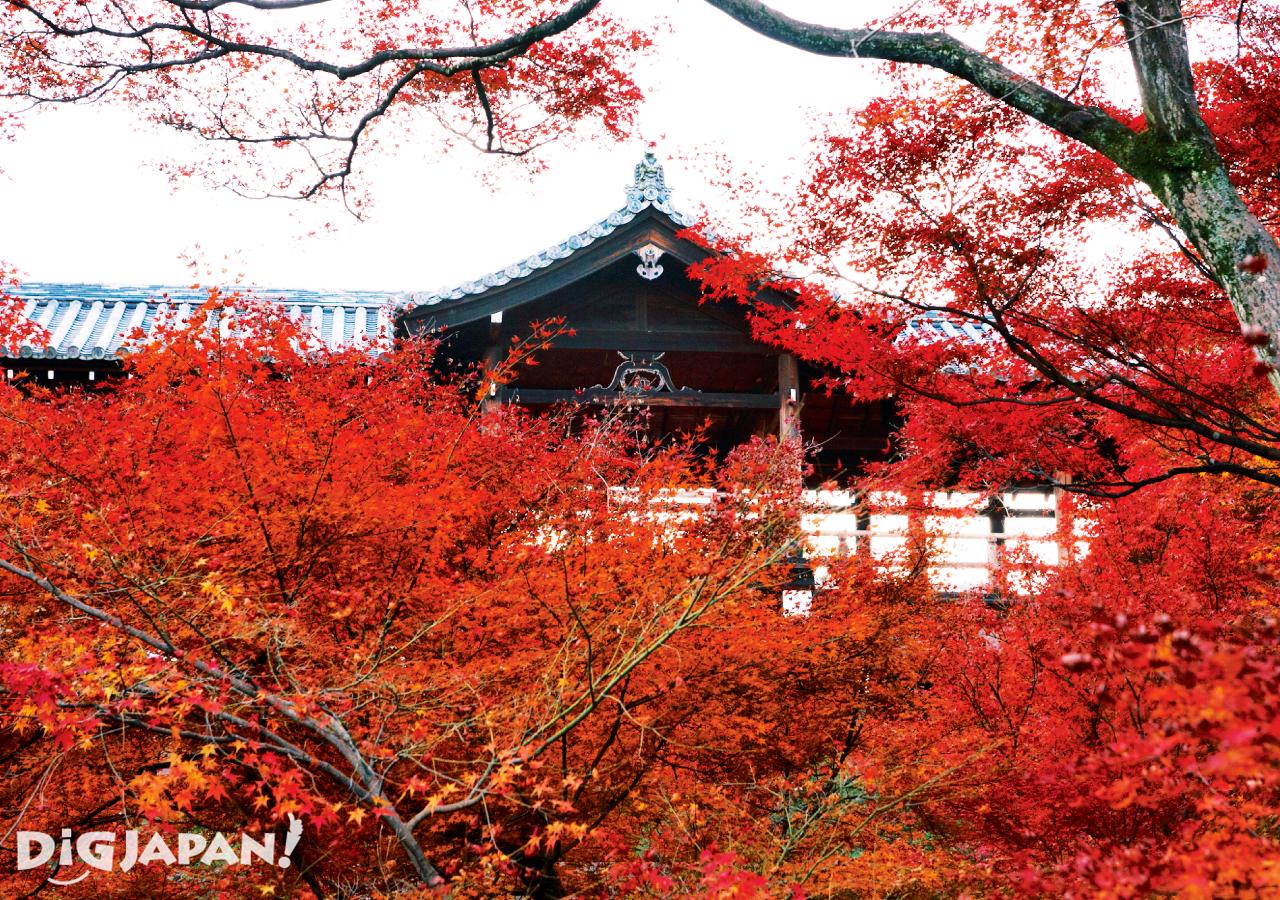 京都必看楓葉景點-東福寺
