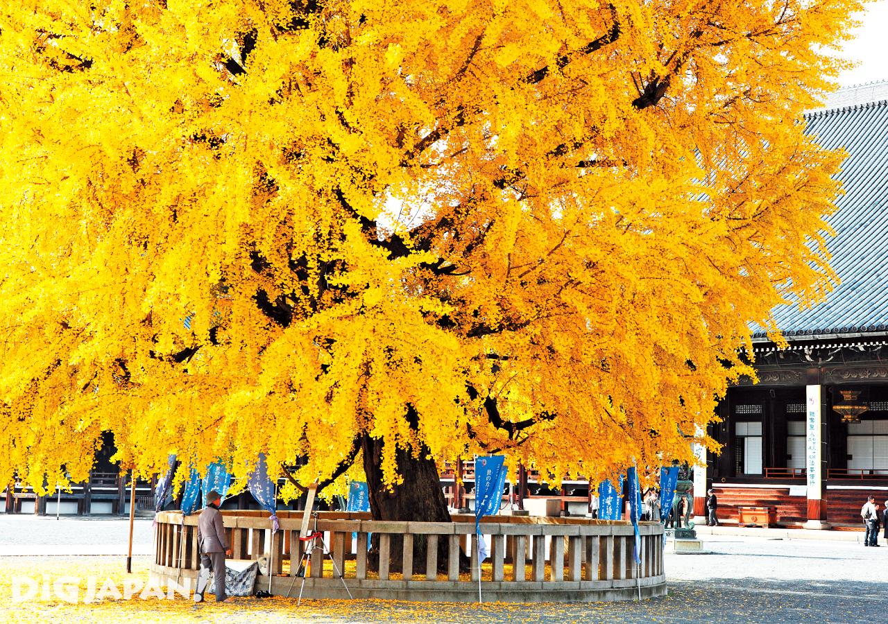 京都必看楓葉景點-西本願寺