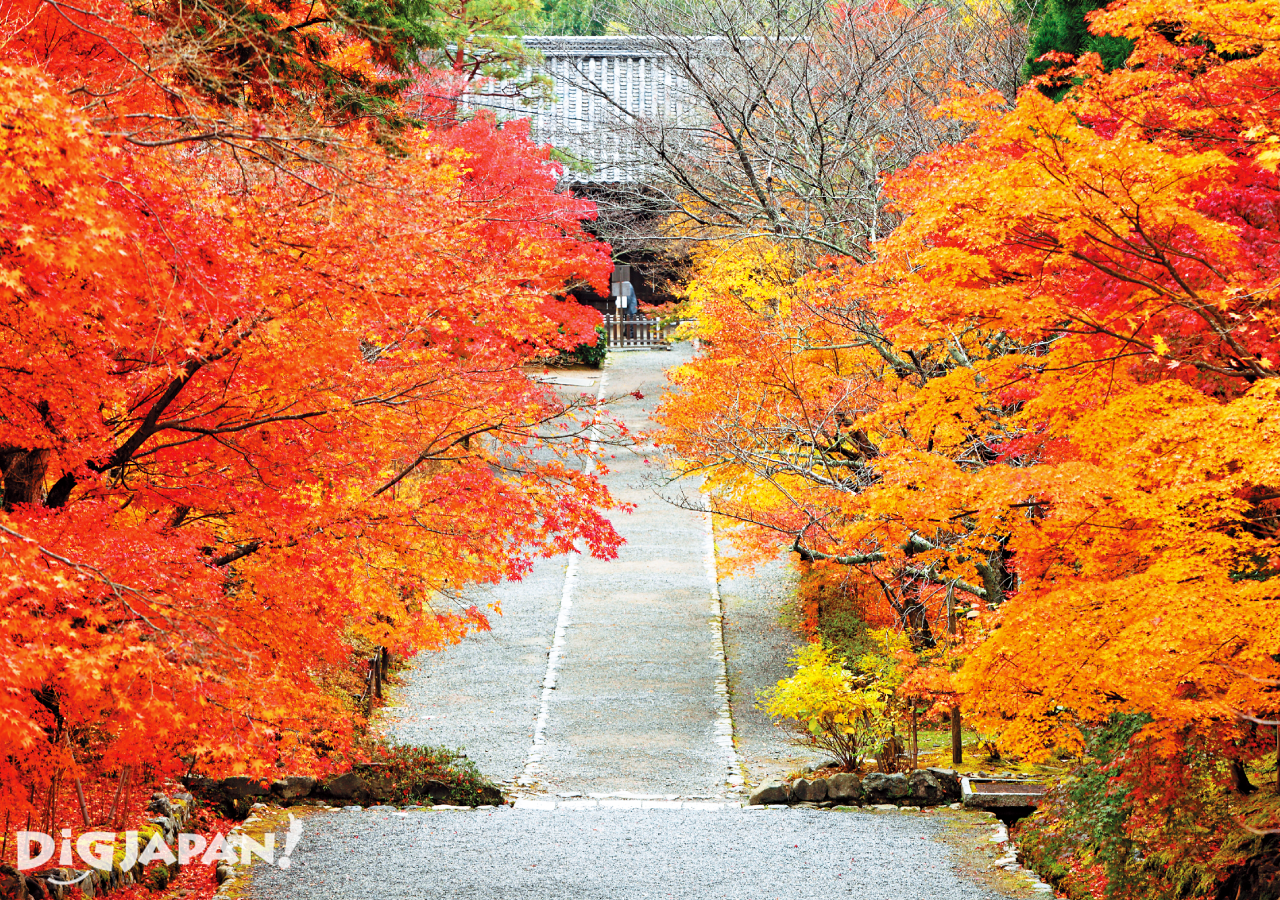 京都必看楓葉景點-二尊院