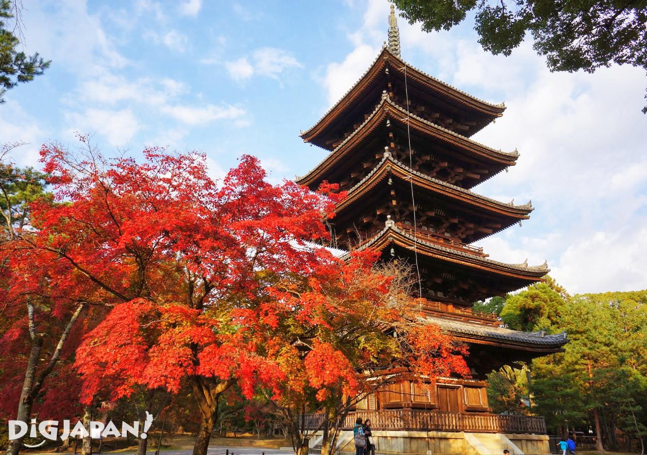京都必看楓葉景點-仁和寺