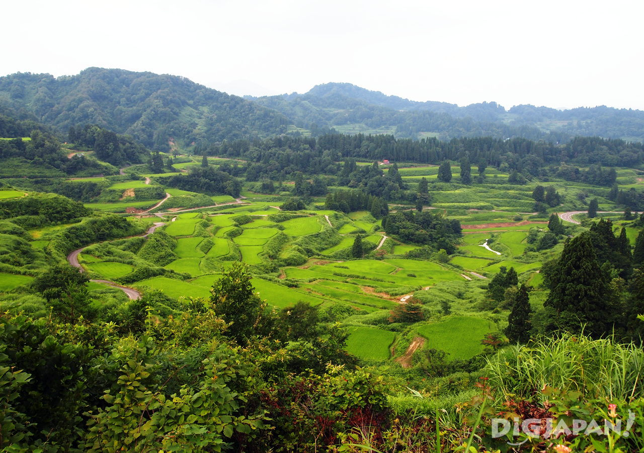 The beautiful terraced rice fields of Hoshi Toge.