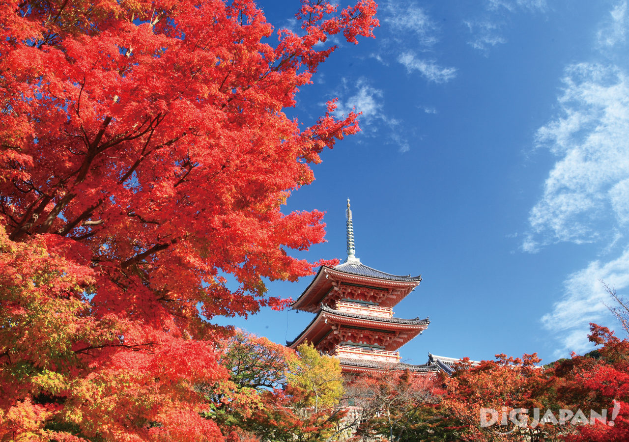 Kiyomizu-dera in the autumn with red leaves