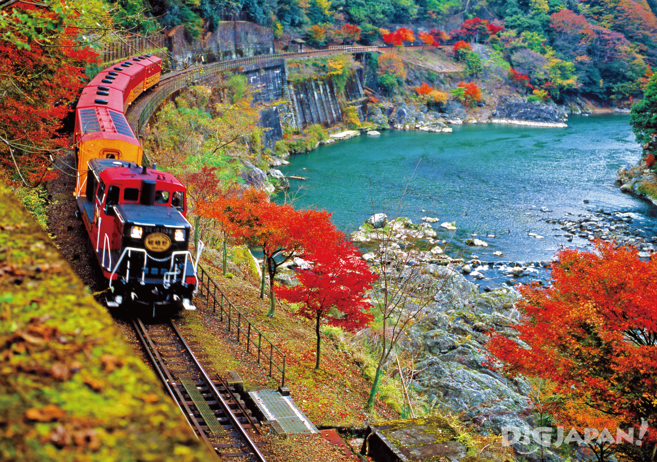romantic train sagano in the fall